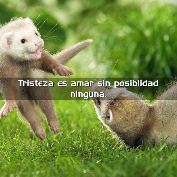 tristeza es amar sin posibilidad ninguna