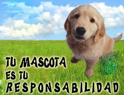 tu mascota es tu responsabilidad