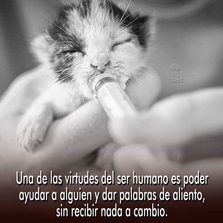 Una de las virtudes del ser humano es poder ayudar a alguien y dar palabras de aliento sin recibir nada a cambio