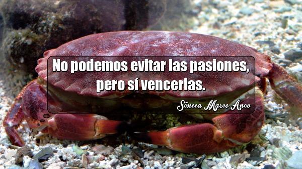 No podemos evitar las pasiones pero sí vencerlas